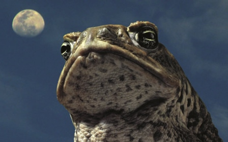 Cane Toads An Unnatural History