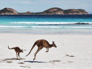 Aussie Documentary <em>Kangaroo: A Love-Hate Story</em> Gets US Distribution