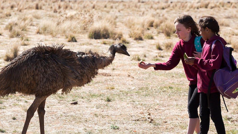 emu-runner1