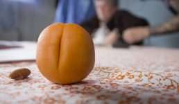 Flickerfest Focus: Apricot